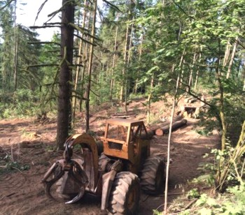 Tree removal and logging