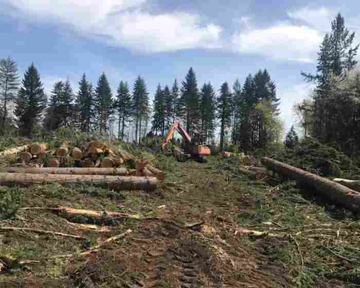 clear cutting trees, brush, and vegetation