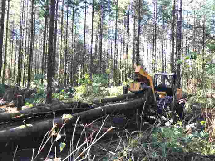 commercial tree thinning and logging